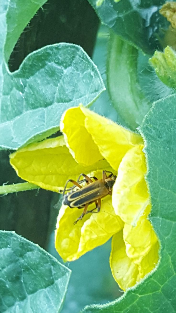 What is this bug? #gardening #garden #DIY #home #flowers #roses #nature #landscaping #horticulture