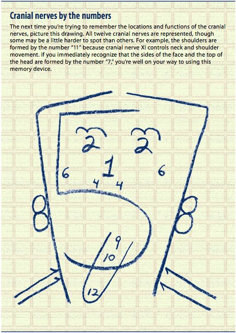 Cranial Nerves memory trick. 1) Olfactory. 2) Optic. 3) Oculomotor. 4) Trochlear. 5) Trigeminal. 6) Abducens. 7) Facial. 8) Vestibulocochlear. 9) Glossopharyngeal. 10) Vagus. 11) Spinal Accessory. 12) Hypoglossal.  I'm not sure how much this helps, but I'd never seen this little graphic before, and it is clever. Good luck in school; the job is worth it!