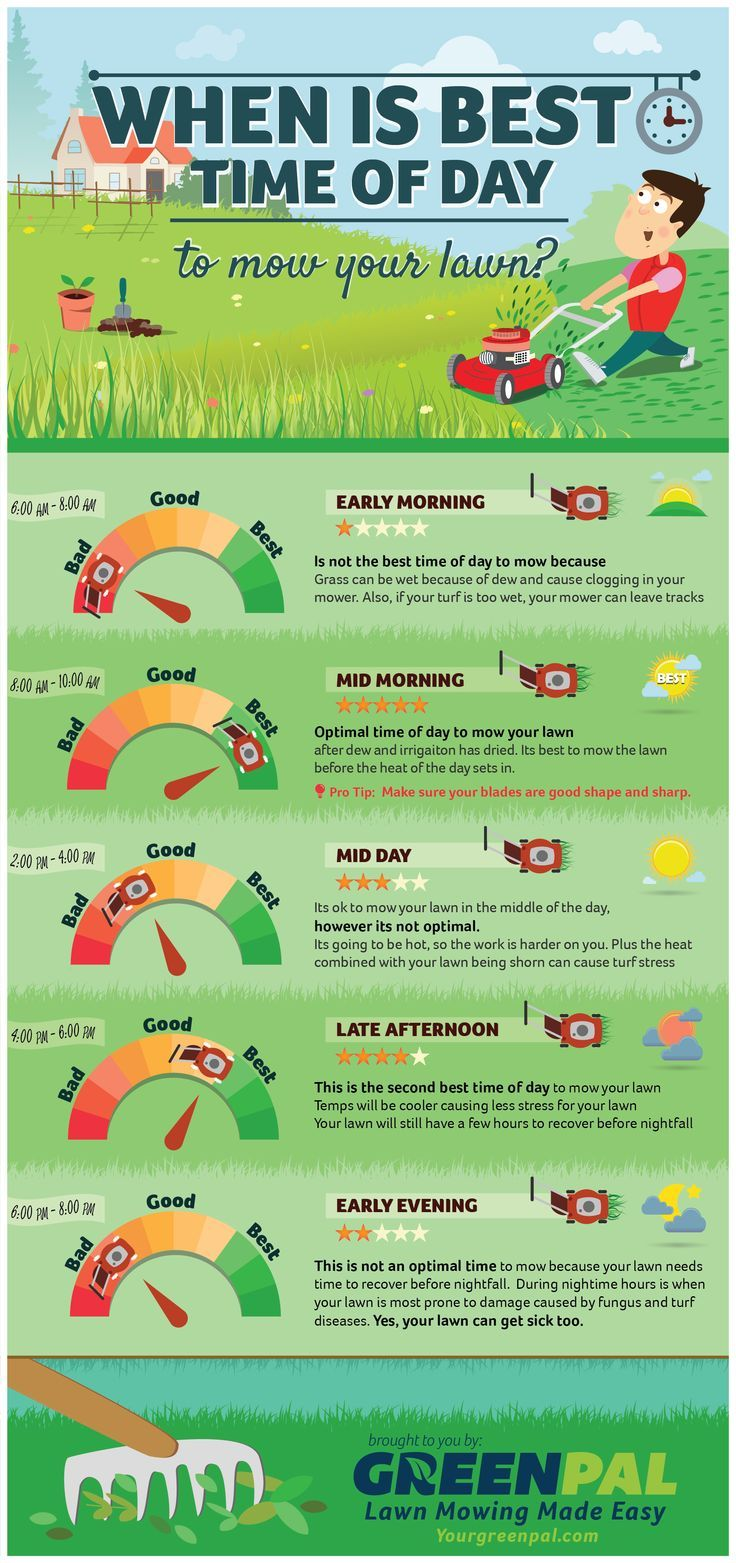 When is the best time to mow your lawn? Early morning? Mid-afternoon? Check out this infographic to find out!