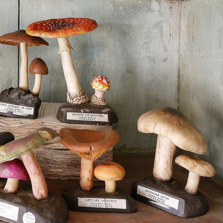 Collection de champignons de pharmacie 1960 - Laurent Ardonceau - Arts populaires et objets de curiosité - L'ile aux brocantes