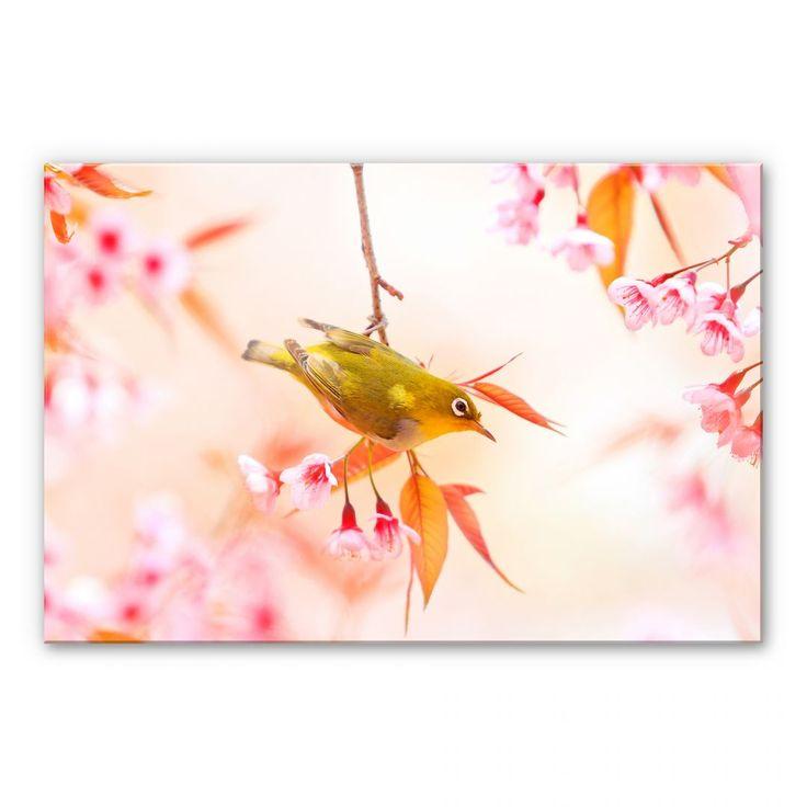Inspirational Acrylglas Wandbild Vogelgezwitscher in der Kirschbl te wall art de
