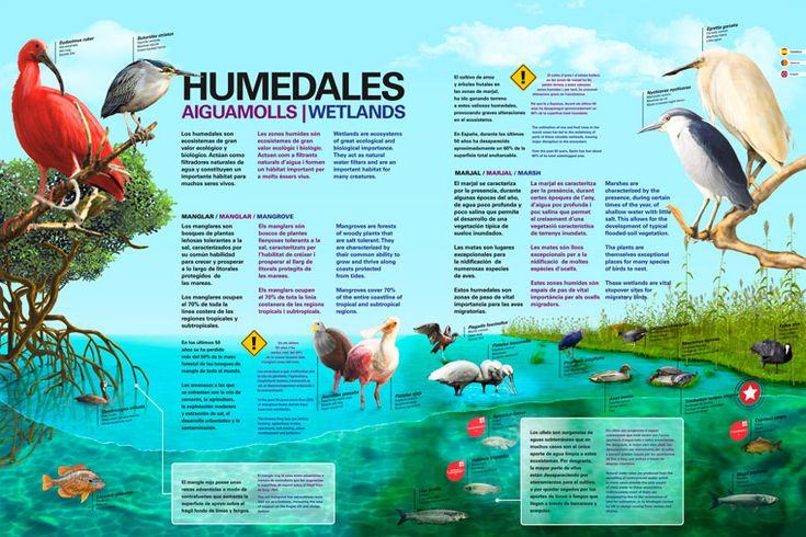 Humedales. L'Oceanogràfic.    Diseño ilustraciones y maquetación del nuevo cartel de la instalación de Humedales.  Este cartel va destinado a mostrar al público información relativa a los Marjales y Manglares: Fauna, vegetación y amenazas.