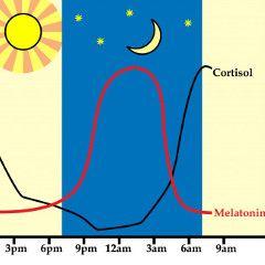 La mélatonine (hormone du sommeil) pourrait renforcer les os