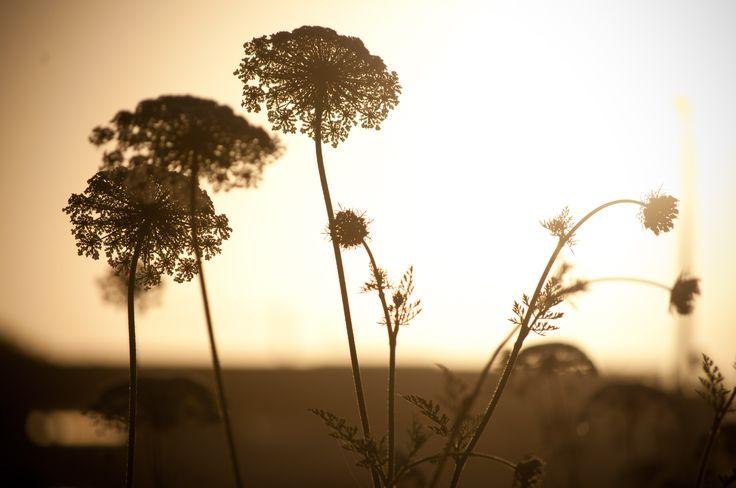 flor, sunset!