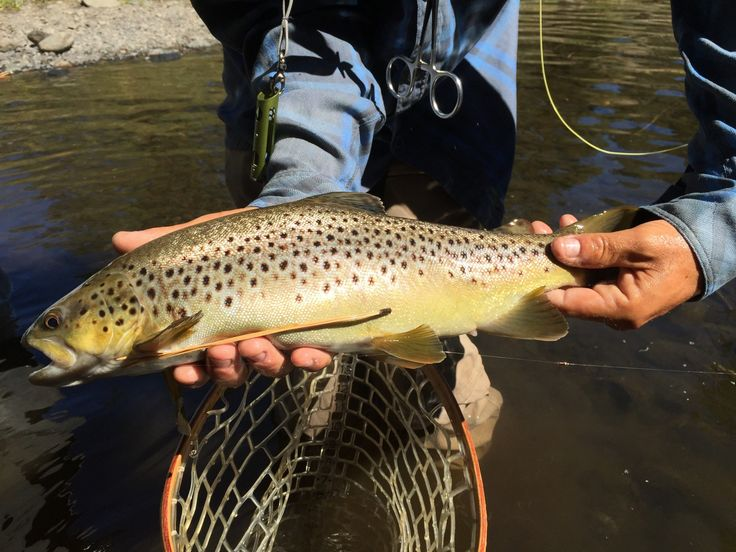 Fly fishing update 9/10/2016