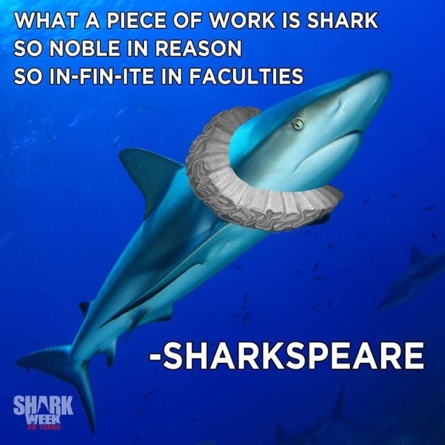 1709 Best Images About Shark On Pinterest Sharks Whale