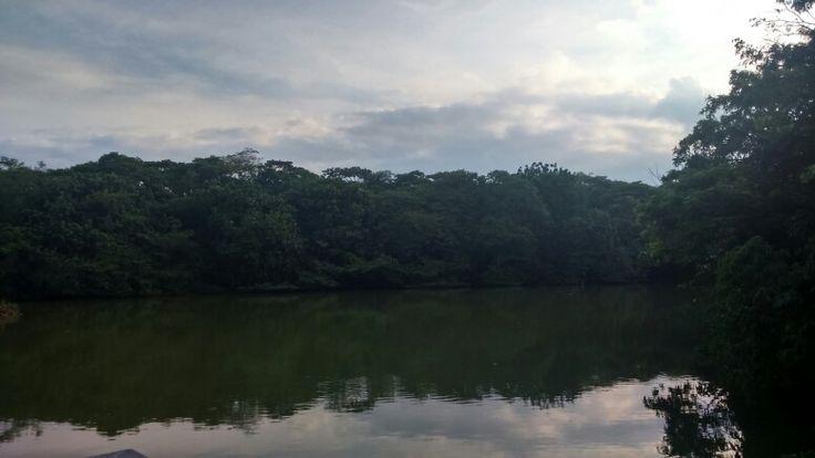 #lago