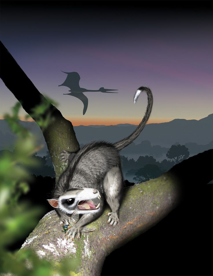 Some of the world's earliest mammals were the multituberculates, a group of small rodentlike animals that first emerged on Earth about 165 million years ago. For the next 80 million years, they stayed small, seeming to evolve slowly while living in a limited number of habitats and eating insects. Here, an artist's conception depicts a multituberculate in its natural habitat at the time of the dinosaurs.