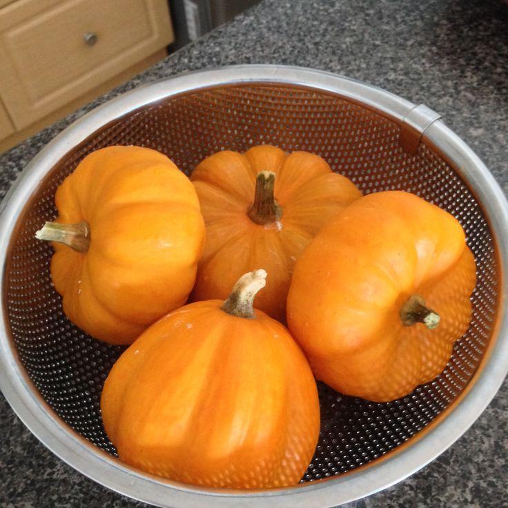 Pumpkin 媽咪瓜
