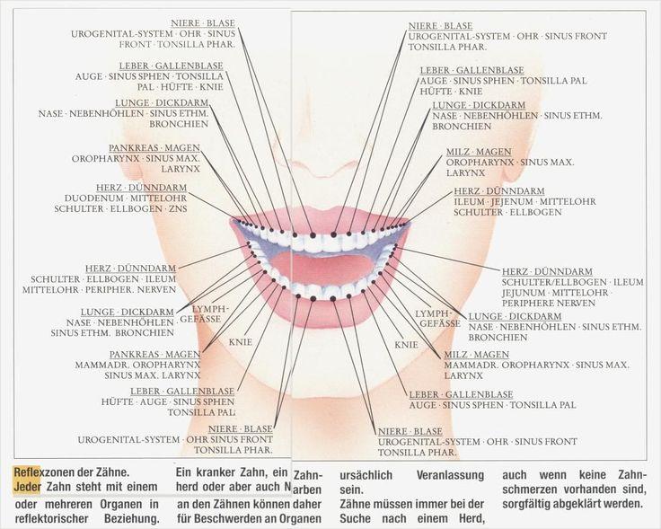 Verbindungen Zähne-Organe.