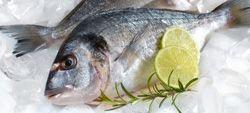 Conservar alimentos no congelador