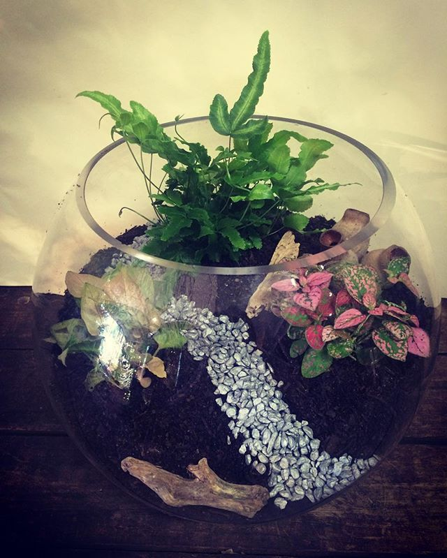 #terrarium love! Message me to join one of our terrarium workshops