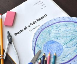 Plant & Animal Cell Activities for Fourth Grade | eHow