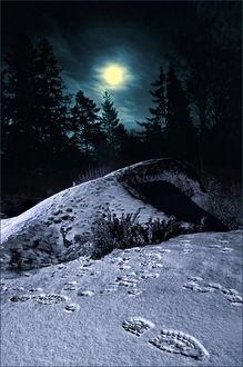 Moonlight.  © Allan Wallberg