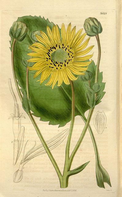 Tumblr scientificillustration n211 w 1150 by biodivlibrary on flickr