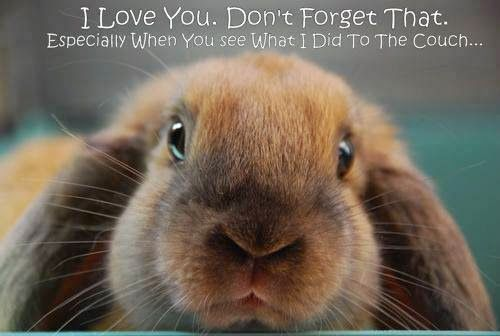 Has Anybody Elses Bunny Got Just The Best Innocent Face When They've Been Up To Bunny Mischief  #BunnyBox