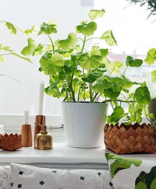 28 best Decorating with Houseplants images on Pinterest ...