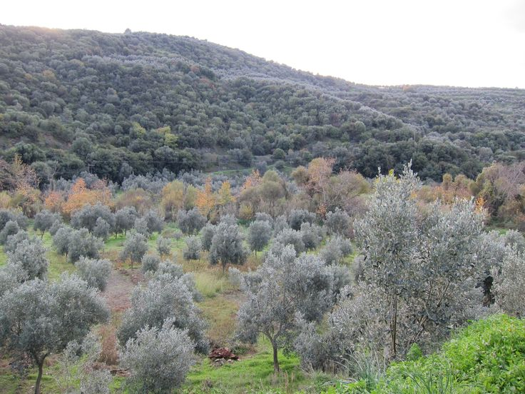 View from the K olive grove - early in the morning