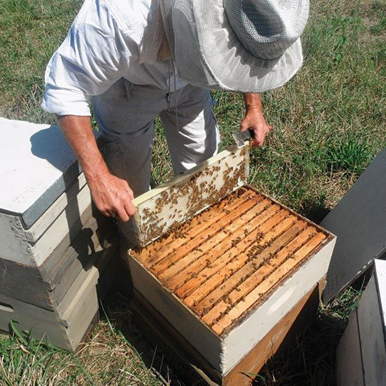 99 best The Beeu0027s Knees images on Pinterest Bees, Beekeeping and - fresh apiary blueprint examples
