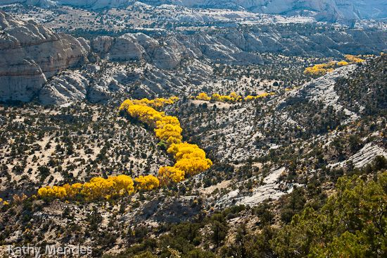 I like the yellow meandering down the Escalante River valley, as seen from Scenic Hwy 12 in Utah.