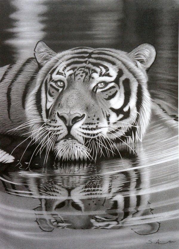Pencil Drawing of Tiger, Amazing Pencil Drawings, http://hative.com/50-amazing-pencil-drawings/,