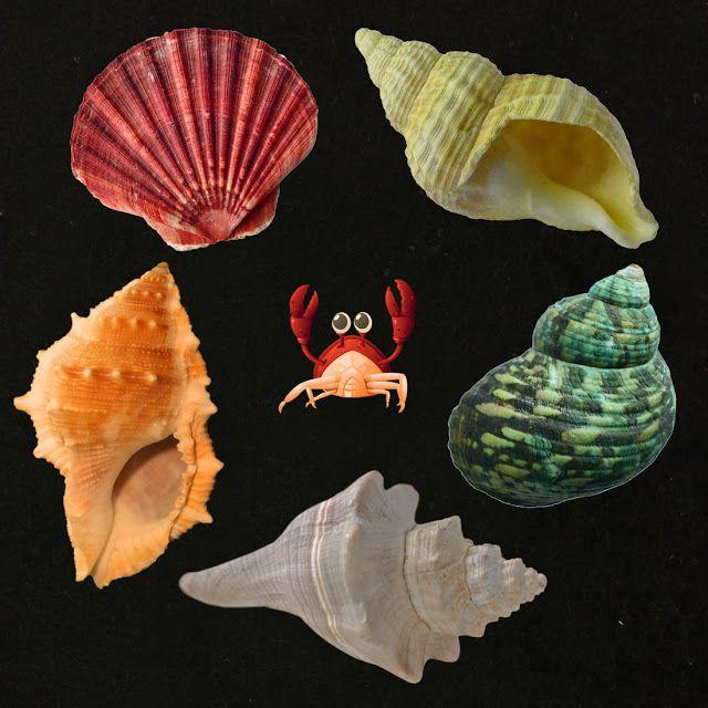 Literary Hoots: Flannel Friday: Seashells!