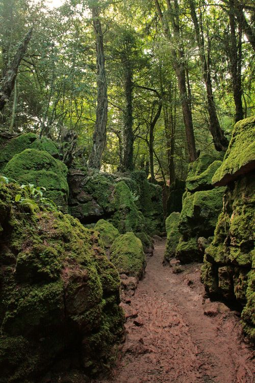 Puzzlewood, Forest of Dean, Herefordshire. Now THIS looks awesome to hike in.