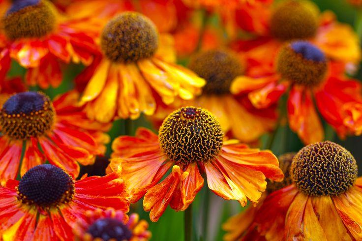 livraisons de fleurs pas cher  352 #fleurs #bouquet