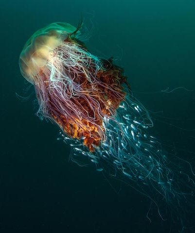 Best Magnificent Wildlife Images On Pinterest Amazing Nature - Beautiful photography reveals underwater complexity aquariums