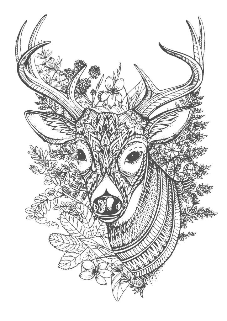 1376 Best Deer Images On Pinterest