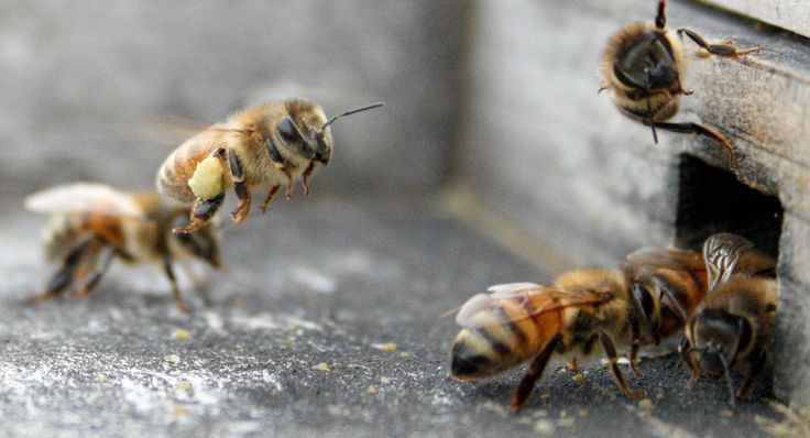 Exciting Things are Coming! Brushy Mountain Bee Farm September 2015 E-Newsletter