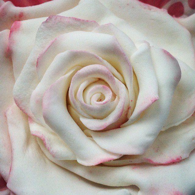 Fondant pink rose.  Роза из мастики