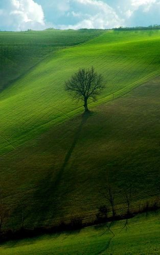 albero solitario..... San Martino in pedriolo