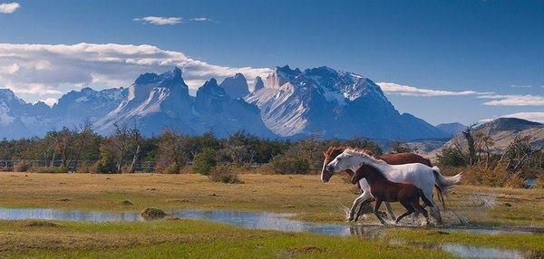 Campos Patagonicos