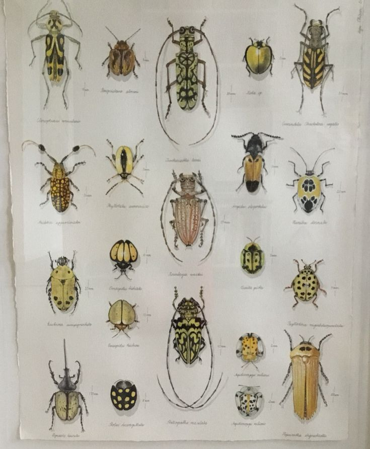 21 yellow bugs