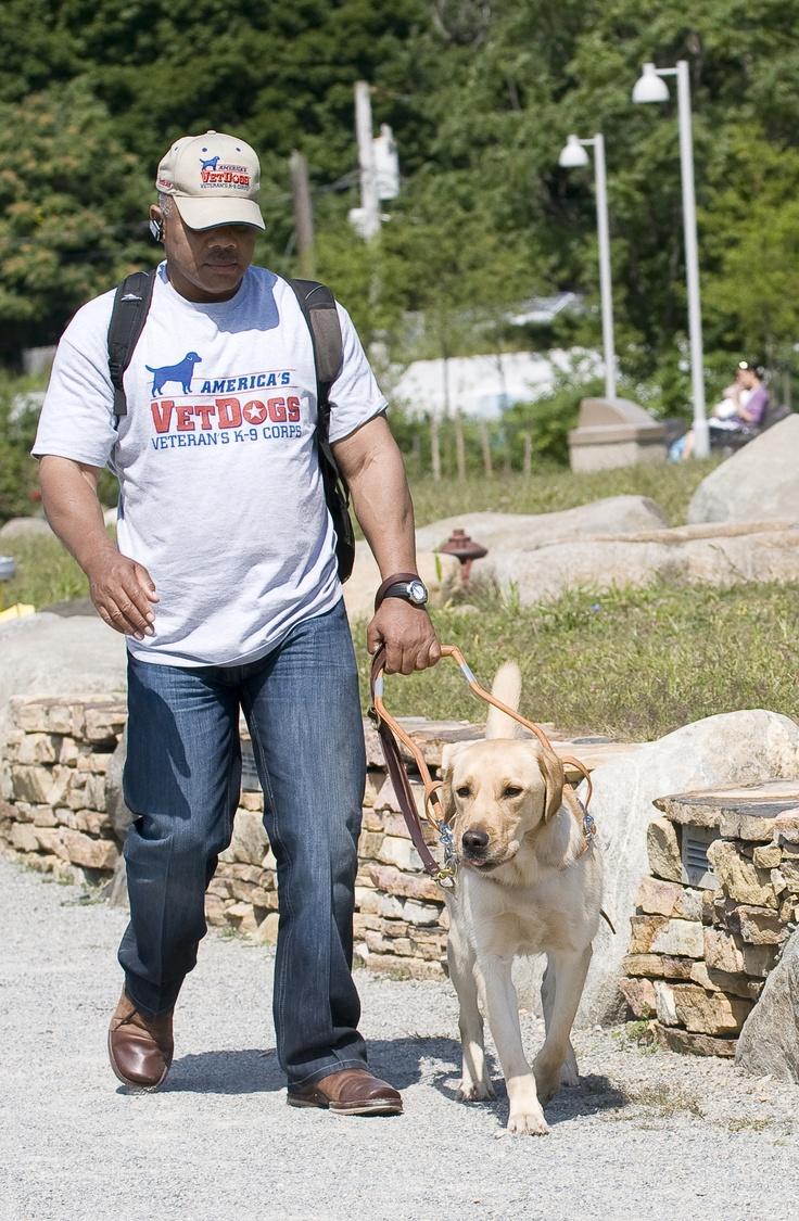 Veteran & guide dog