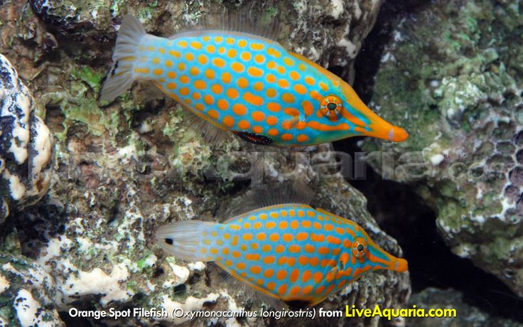 981 Best Images About Saltwater Fish On Pinterest
