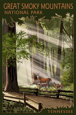 Great Smoky Mountains, Tennessee - Pathway in Trees - Lantern Press Poster