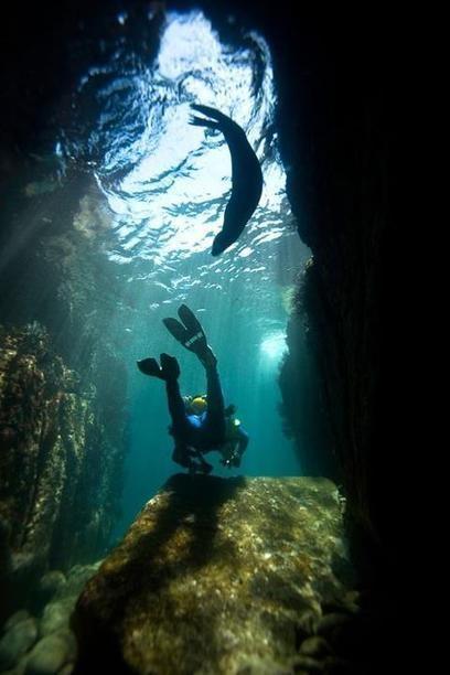 Scuba Diving at Los Islotes/Espiritu Santo. Picture from https://www.facebook.com/purelapaz
