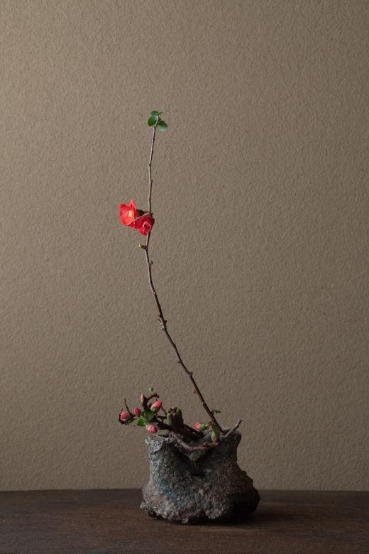2012年2月7日(火) 普段着の花。人をほっとさせます。 花=木瓜(ボケ) 器=伊賀匣鉢(桃山時代)