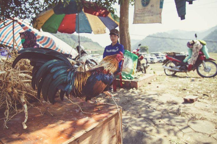 Die Natur ist die beste Inspiration. #vietnam
