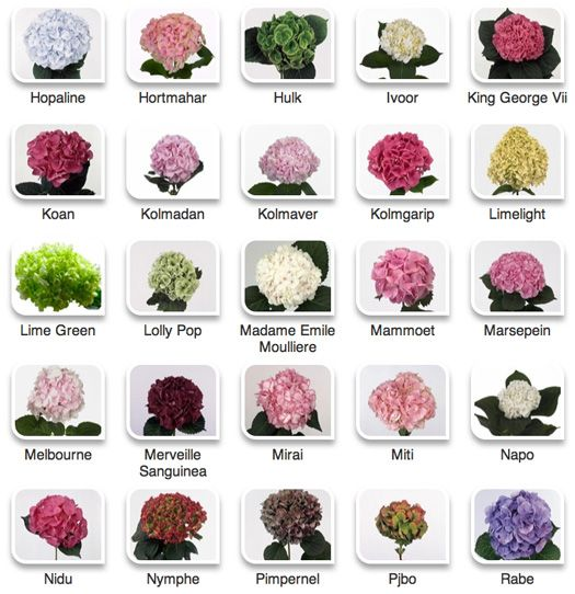 Hydrangeas by color via Hyperactive Farms