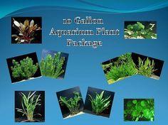 10 gallon live aquarium plant package