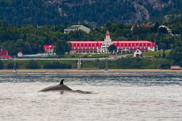 Tadoussac, Quebec, for whale watching.
