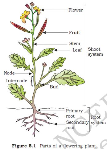 diagram of a power plant pin radish plant diagram on pinterest diagram of a radish plant