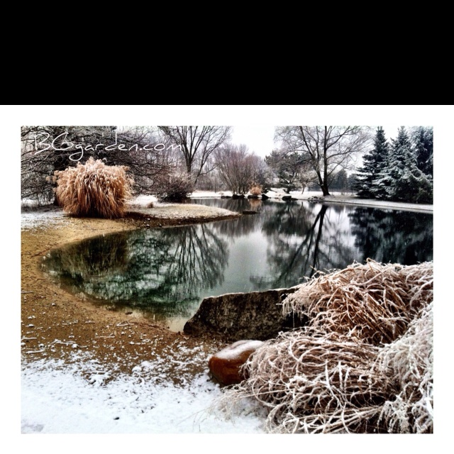 Love snow this time of year in the landscape at BGgarden!Gardens Landscapes, Landscapes Design
