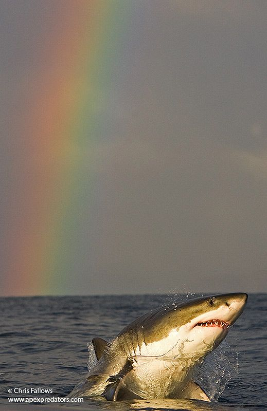 10 photos of great white sharks to take your breath away
