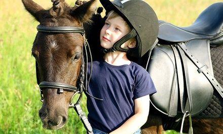 Centre Equestre de la Bruche à Lingolsheim : 1 séance découverte en poney pour enfants: #LINGOLSHEIM 9.99€ au lieu de 20.00€ (50% de…