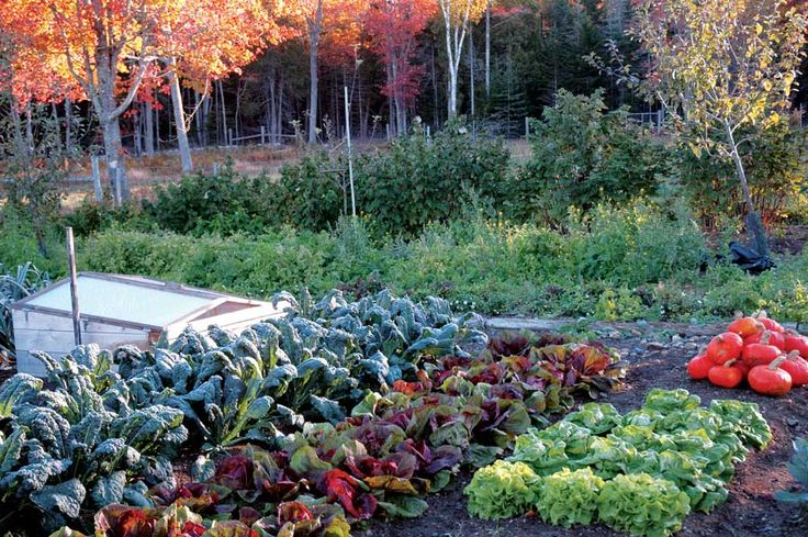 Top tips for fall vegetable gardens