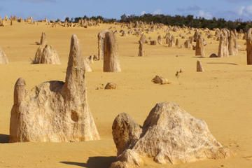 Pinnacles Desert, Koalas and Sandboarding 4WD Day Tour from Perth - Perth | Viator